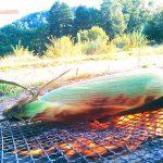 [セローの旅2016夏7]雨の小清水キャンプ場